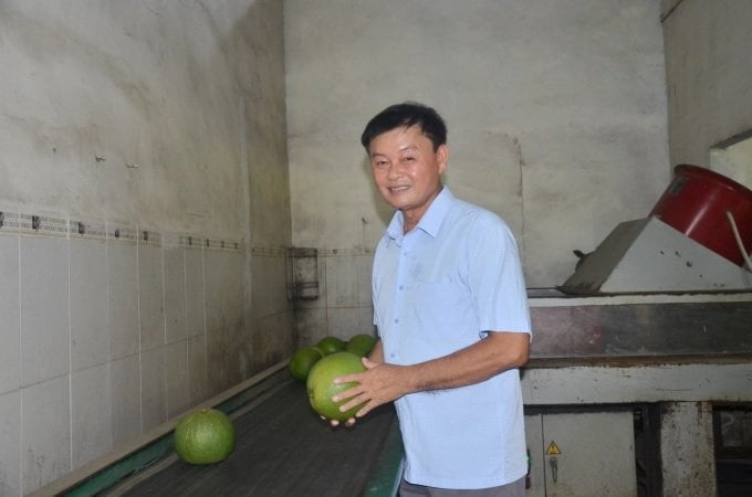 Hợp tác kinh tế trồng bưởi da xanh